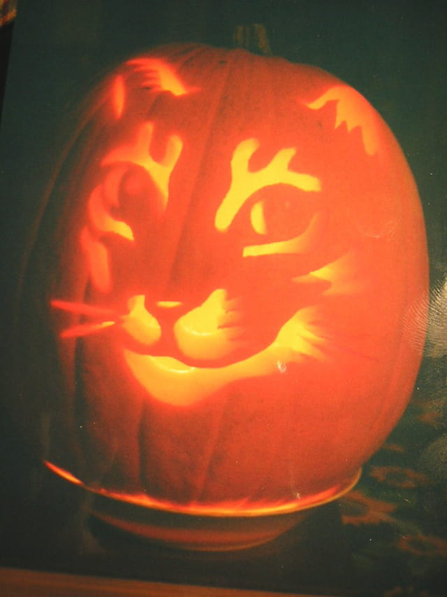Le chat d'halloween 2006
