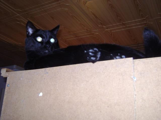 Le chat perché!