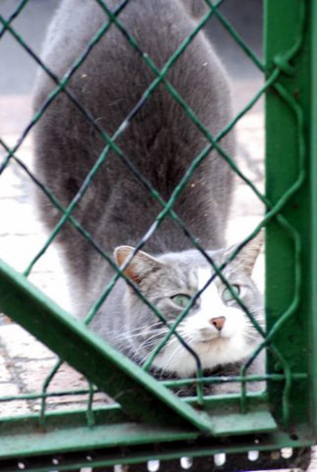 le chat qui minaude derrière le portail