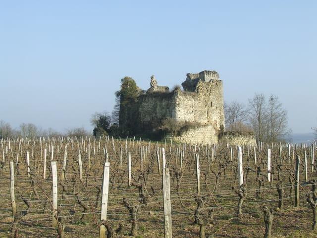 Le chateau dans les vignes