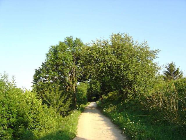 Le chemin de l'été
