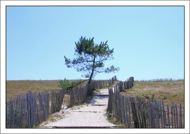 Le chemin de la plage