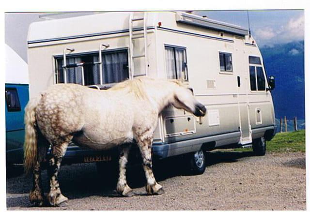 Le cheval qui se gratte