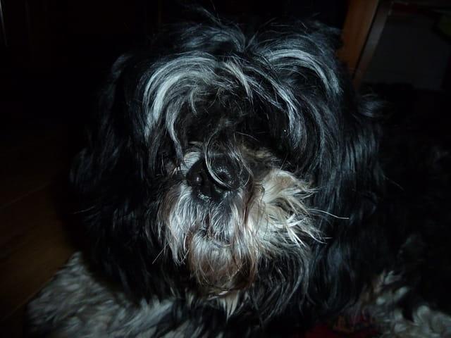 Le chien Paco