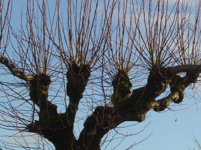 Le ciel à travers les branches