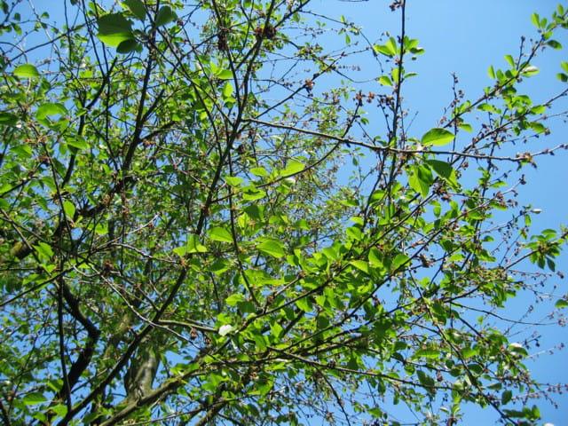 Le ciel derrière les branches