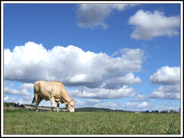 Le ciel et la vache