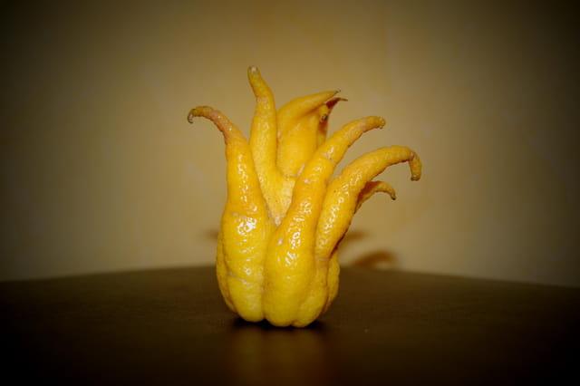 Le Citron Saltimbanque
