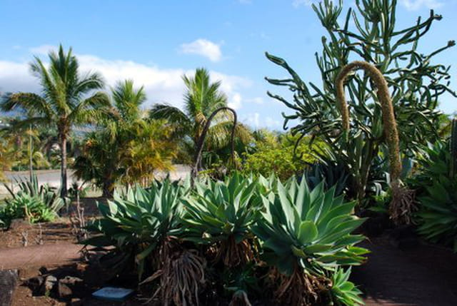 le conservatoire botanique de Mascarin