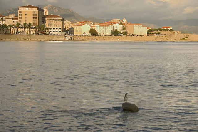 Le cormoran à Ajaccio