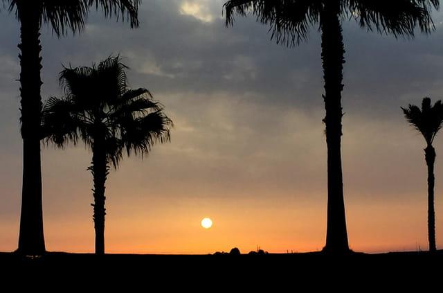 Le coucher de soleil entre les palmiers d'Agadir