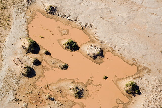 Le désert après la pluie