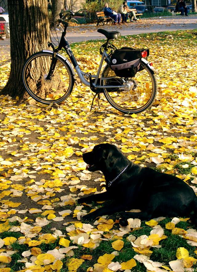 Le gardien de vélo