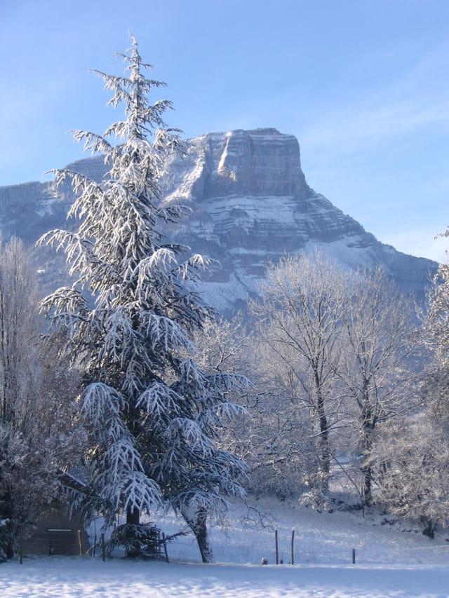 Le granier sous la neige