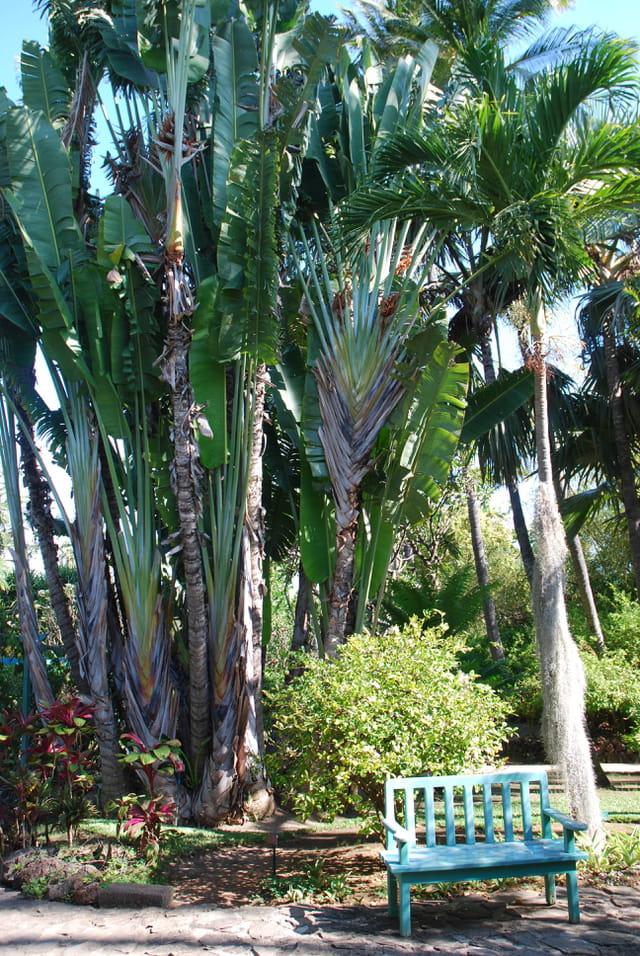 le jardin d'Eden à Saint Gilles Les Bains par Genevieve ...