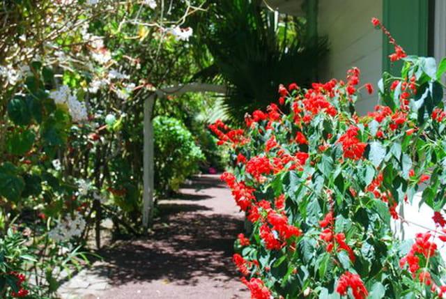 le jardin de la Maison Folio