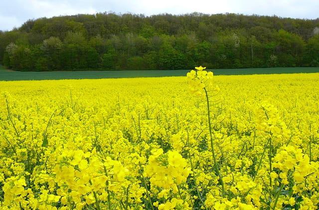 Le jaune à l'honneur pour ce printemps - 3