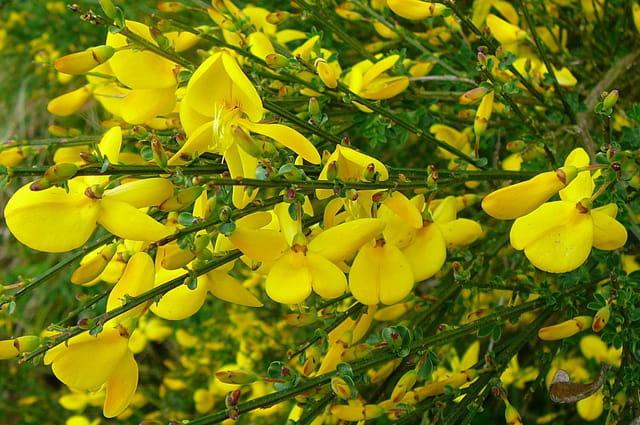 Le jaune à l'honneur pour ce printemps - 4