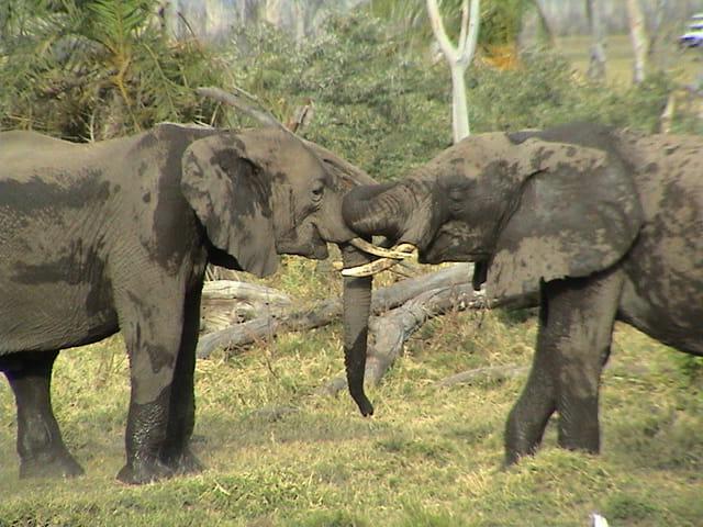 Le jeu des éléphants