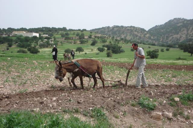 Le laboureur marocain