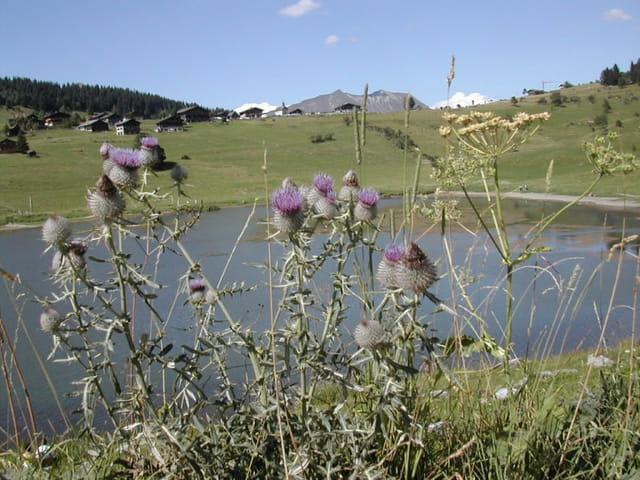 Le lac des Confins