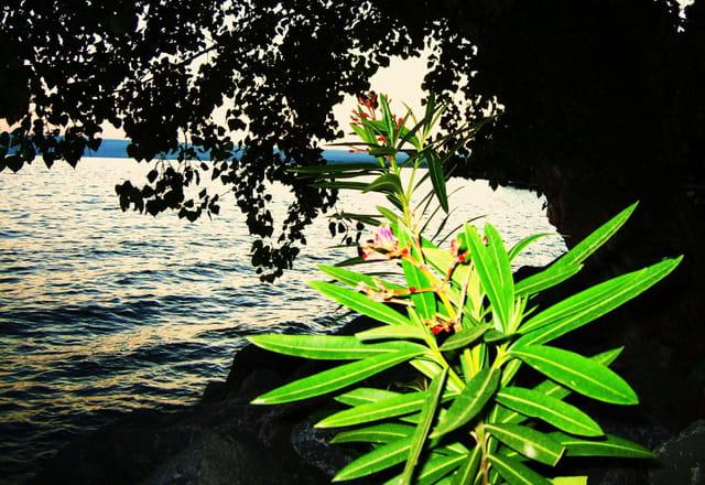 Le lac et sa plante verte par mauro cerica sur l 39 internaute for Recherche sur les plantes vertes