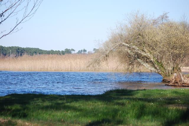 le lac sauvage en avril