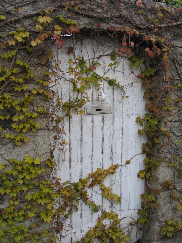 Le lierre et la porte
