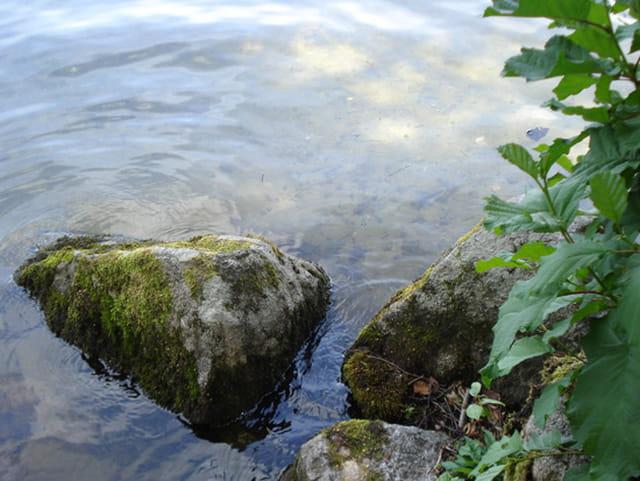 Le long du lac de Gérardmer