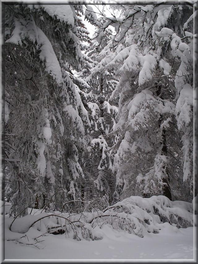 Le manteau de neige