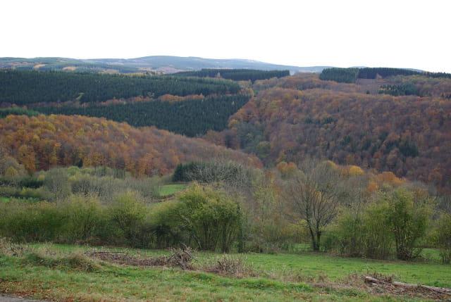 Le Morvan en automne