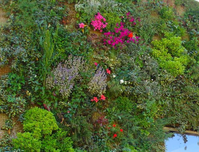 Le mur fleuri du chais