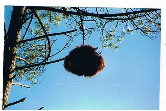 Le nid des écureuils