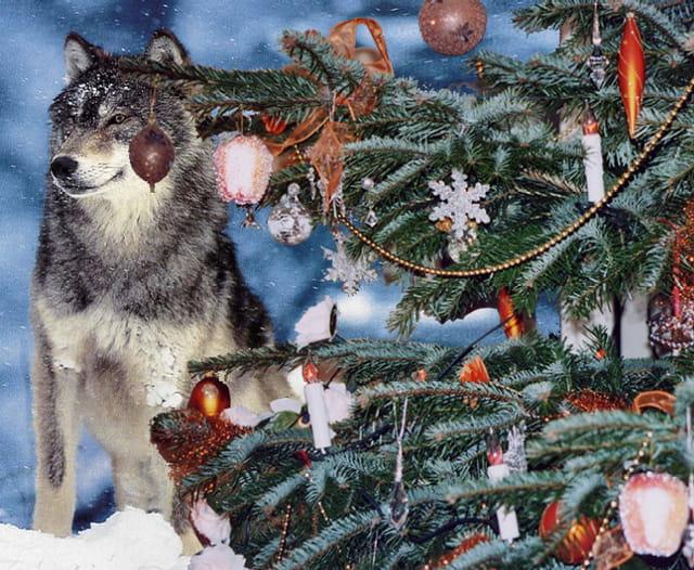 Le Noël des p'tits loups
