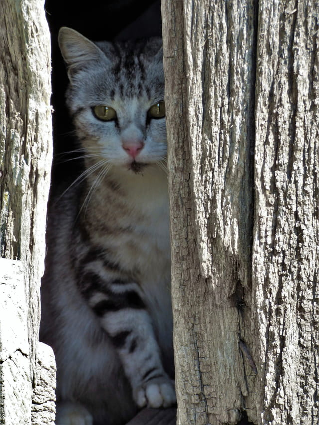 Le petit chat timide