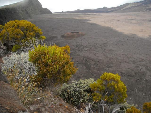 Le petit cratère -Formica leo (0)
