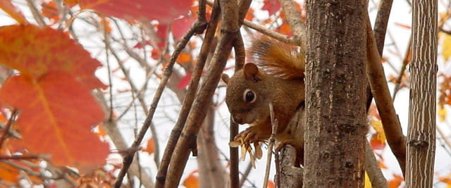 Le petit ecureuil