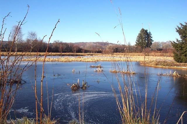 Le petit étang gelé