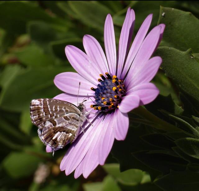 Le petit papillon et la fleur