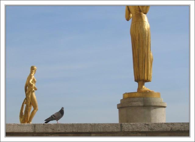 Le pigeon et les statues