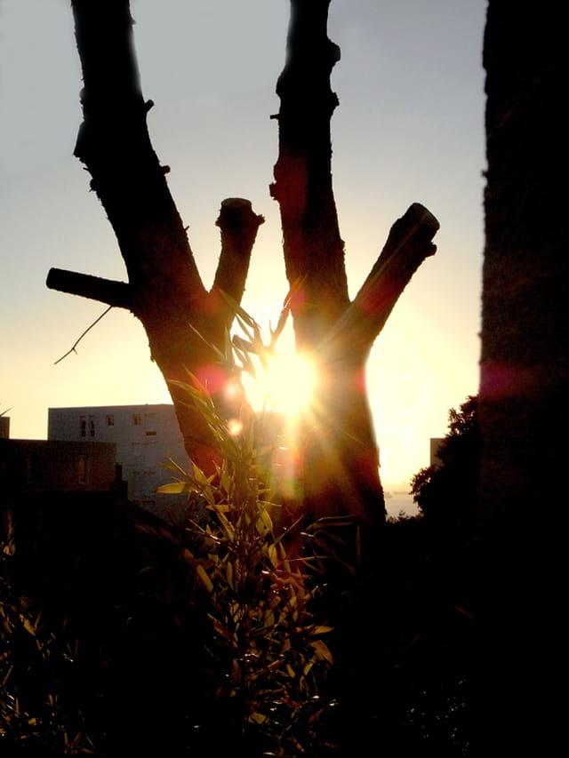 Le pin et le soleil
