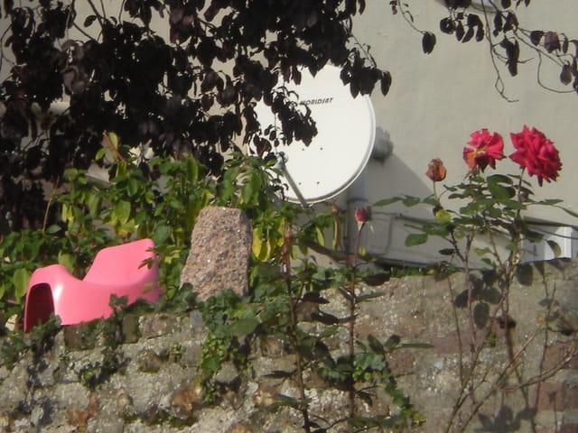 """Le"""" pot aux roses"""""""
