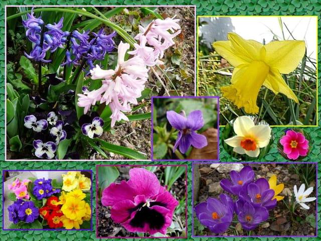 Le printemps a frappé à la porte de mon jardin