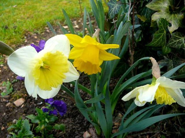 Le printemps arrive en Normandie