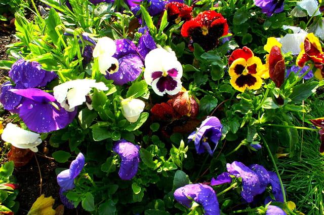 Le printemps au parc phoénix 2