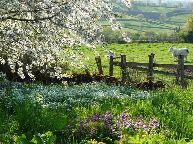Le printemps est arrivé en Charolais