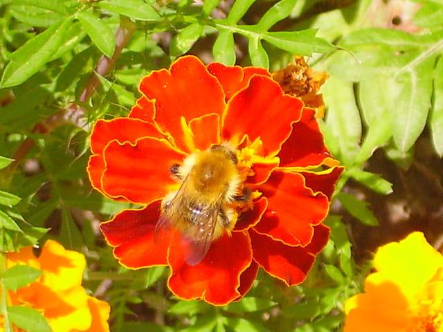 Le régal de l'abeille
