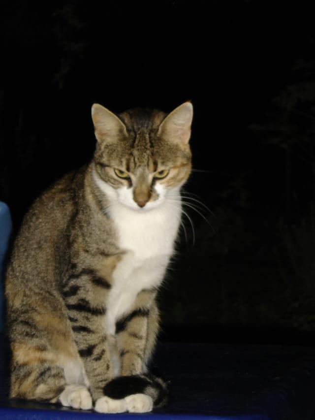 Le regard du chat !!