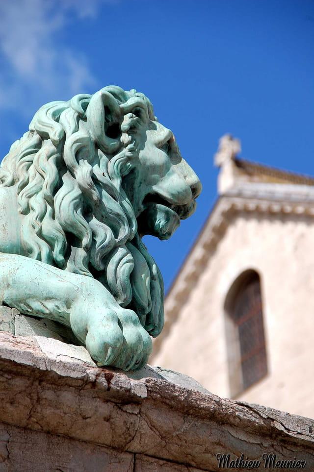 Le regard du lion