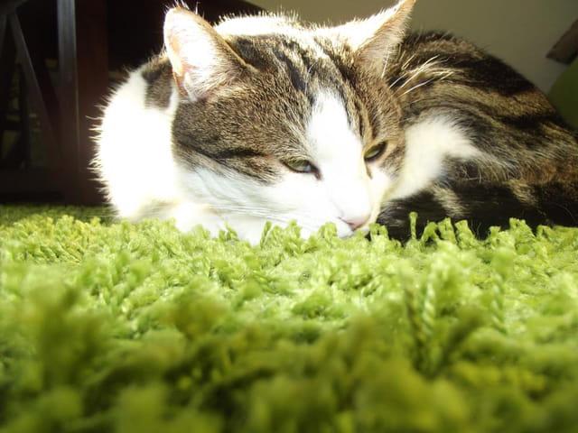 Le repos du chat...